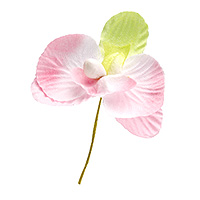 Lot de 10 Orchidées Couleurs Pastels